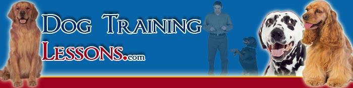 Dean Rankin Dog Training